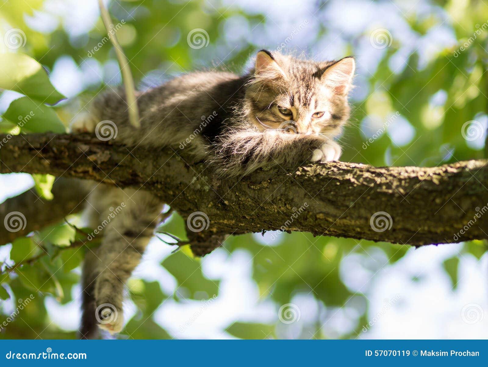 Weinig katje op de boom