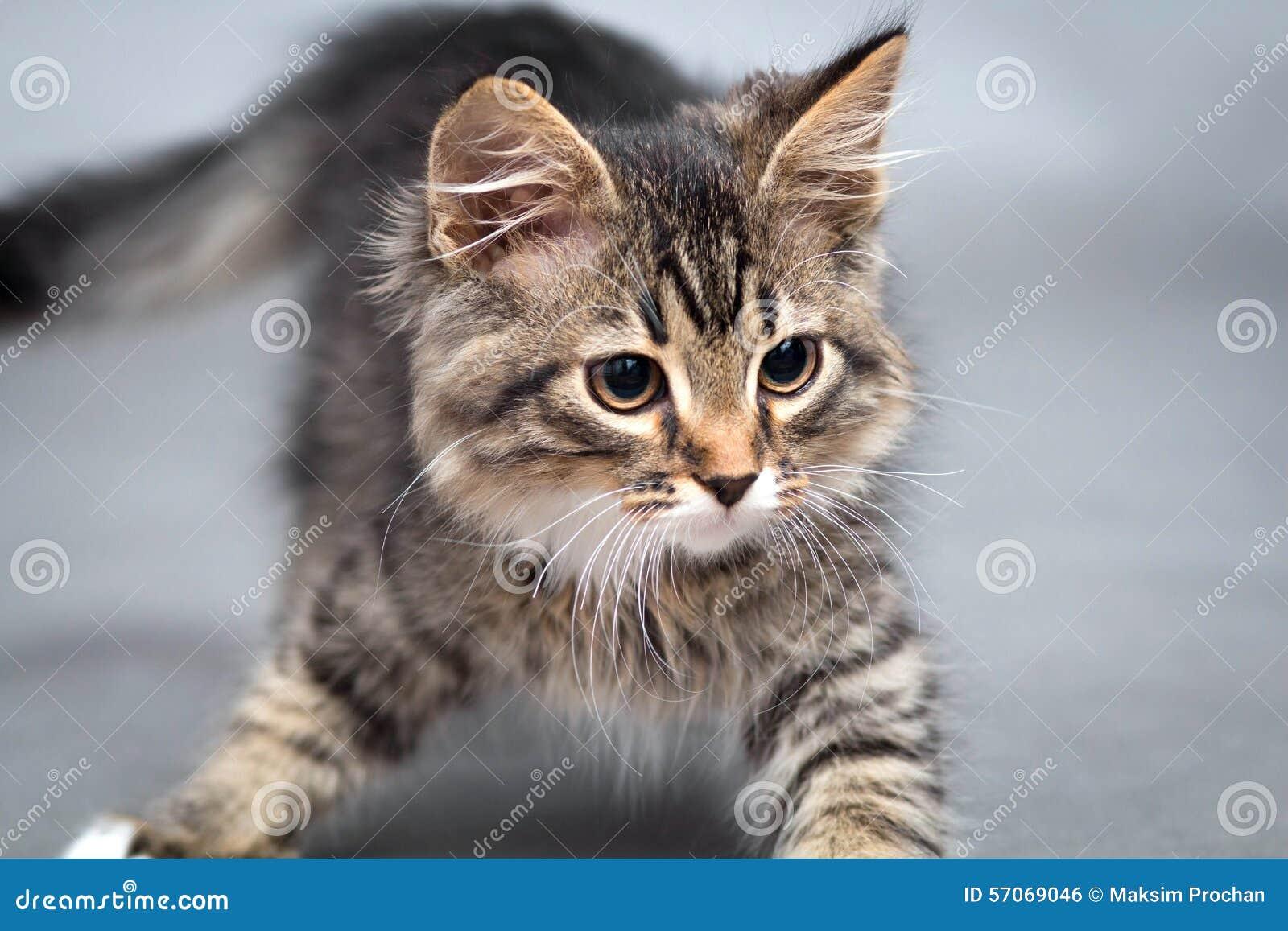 Weinig katje op een grijze achtergrond
