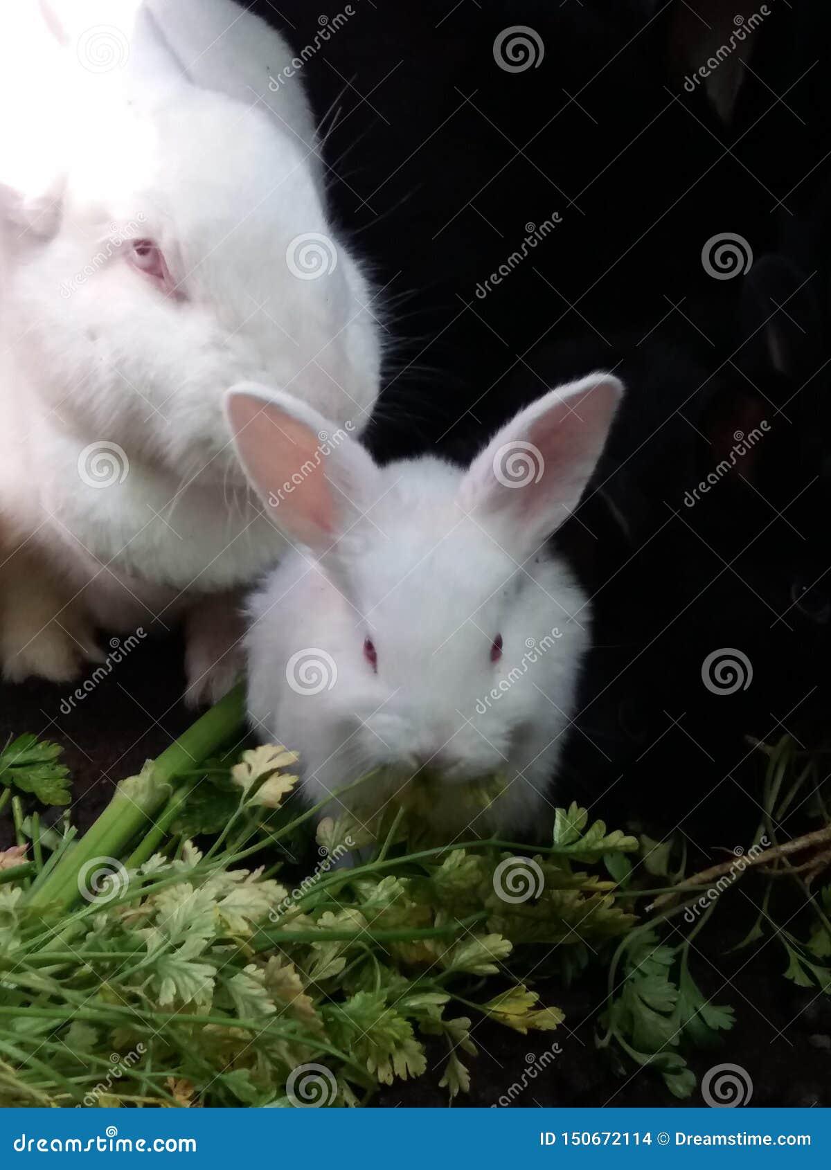 Weinig konijntje en haar mamma die ontbijt hebben