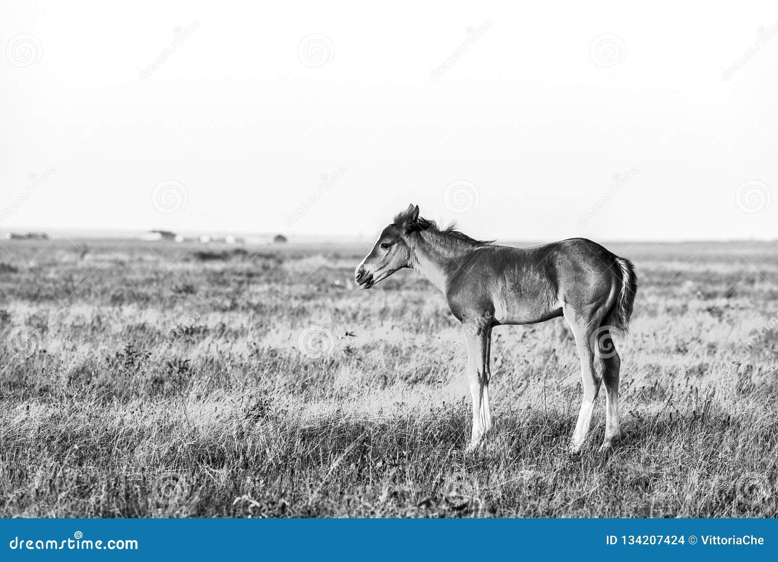 Weinig leuk veulen die zich op het weiland, landelijk landschap bevinden