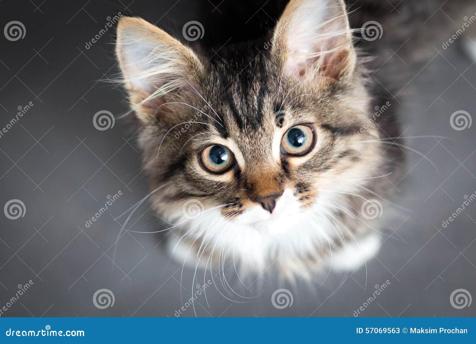 Weinig pluizig katje