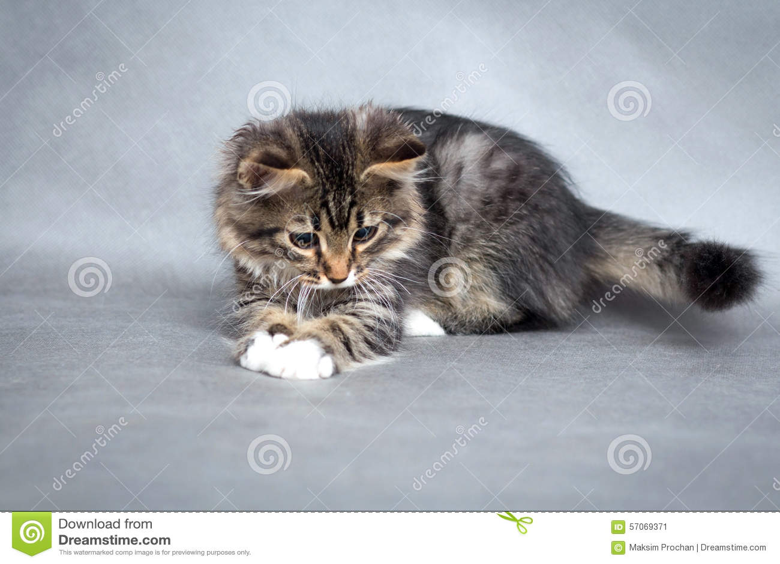 Weinig pluizig katje op een grijze achtergrond