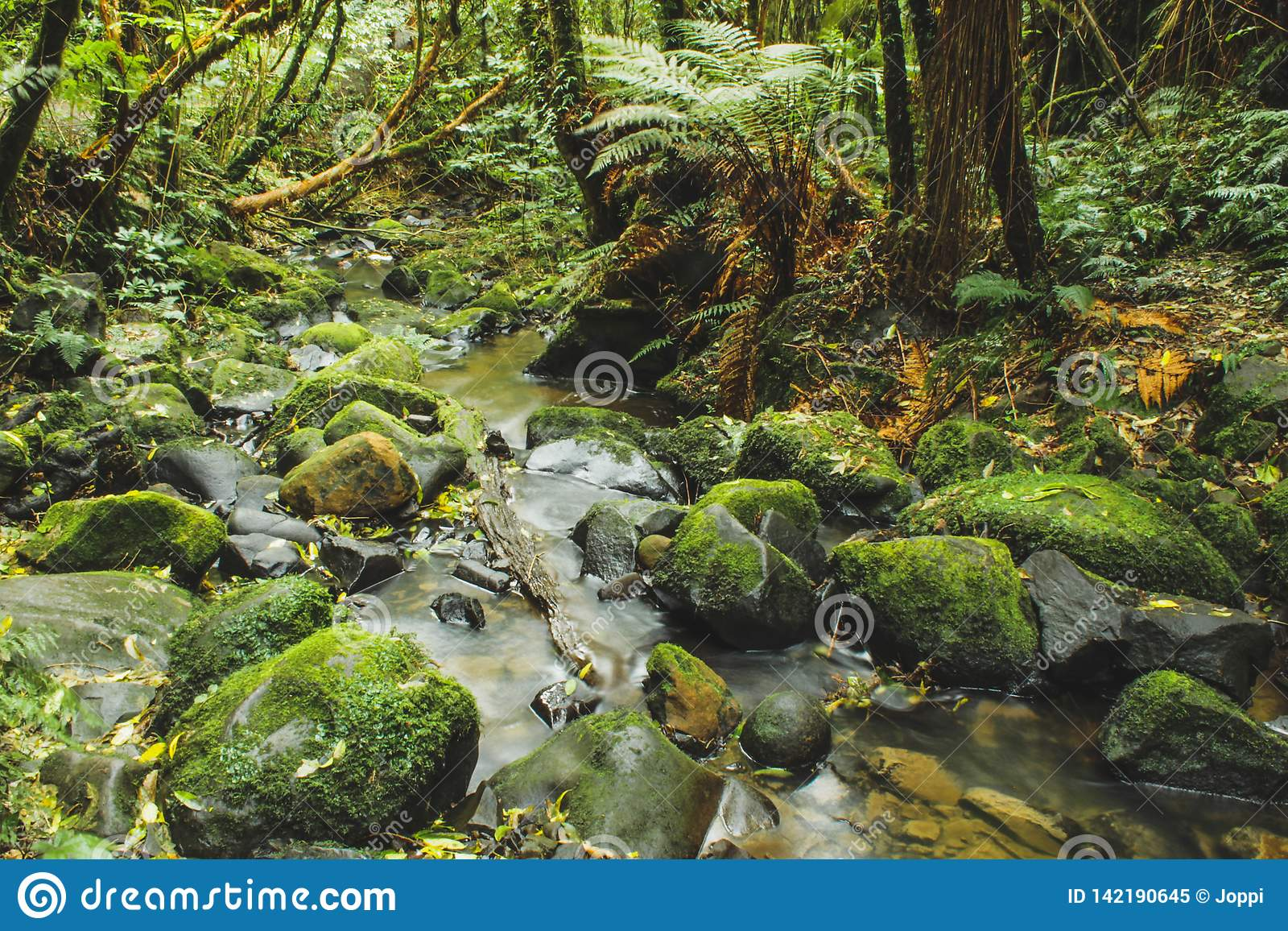 Weinig rivier vloeit door regenwoud in Nieuw Zeeland