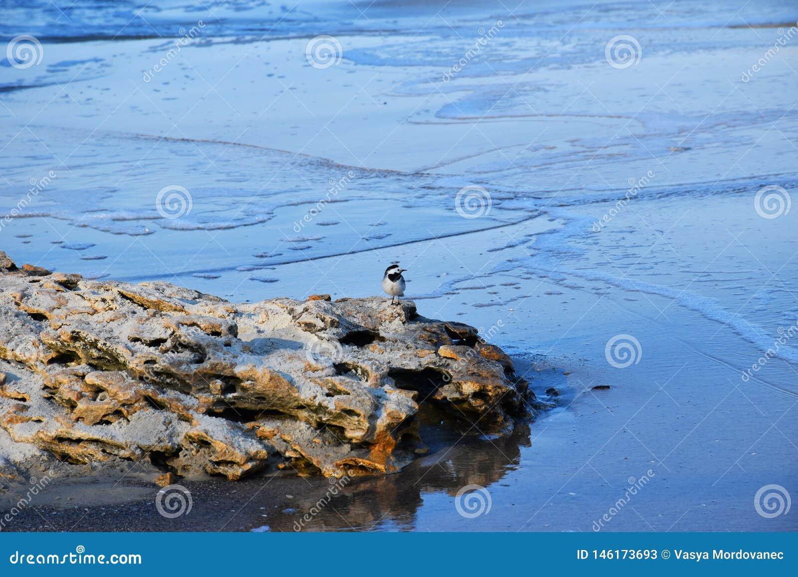 Weinig vogel op een steen door het overzees