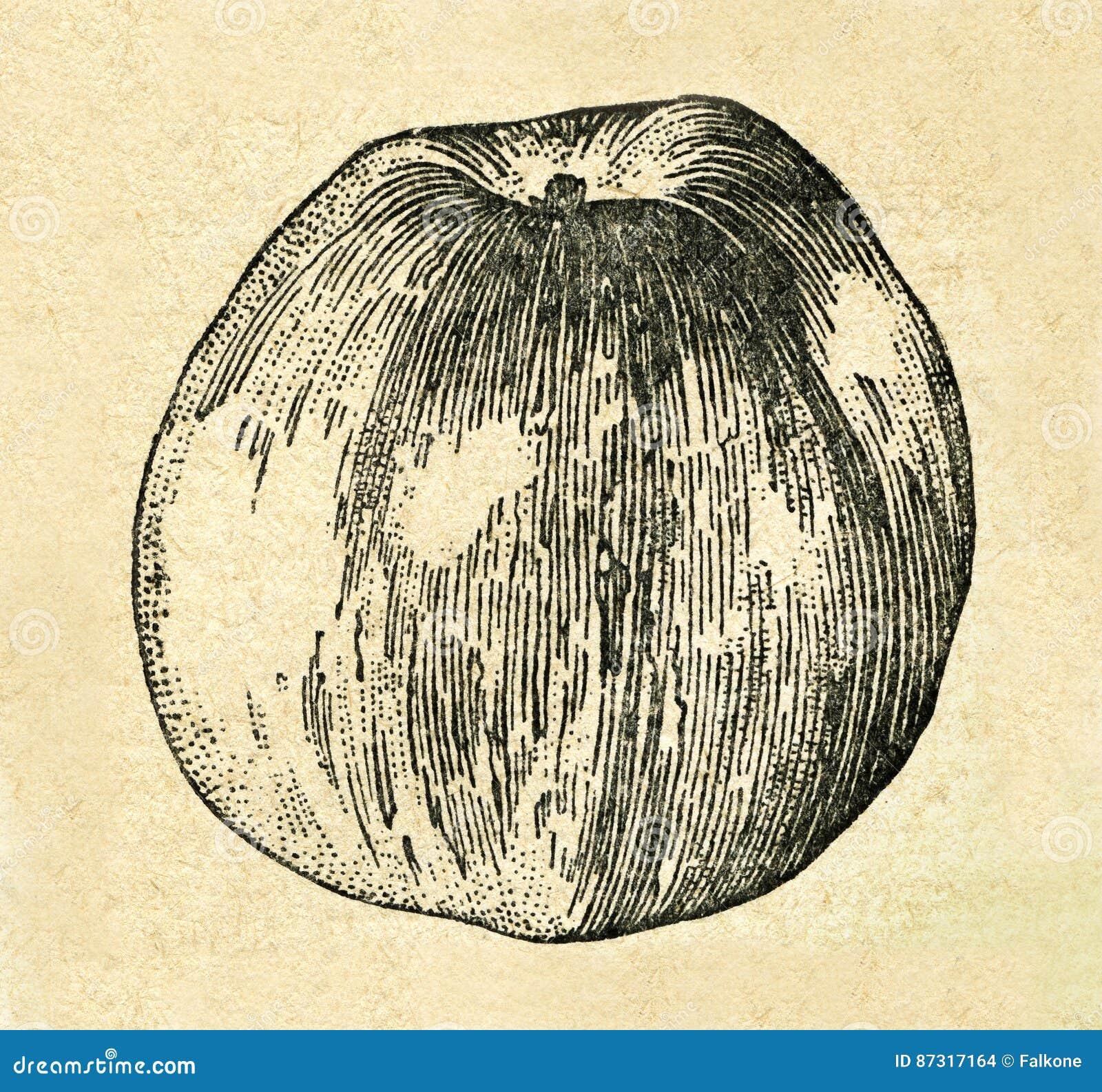 Weinleseillustration eines Apfels vom alten sowjetischen Buch