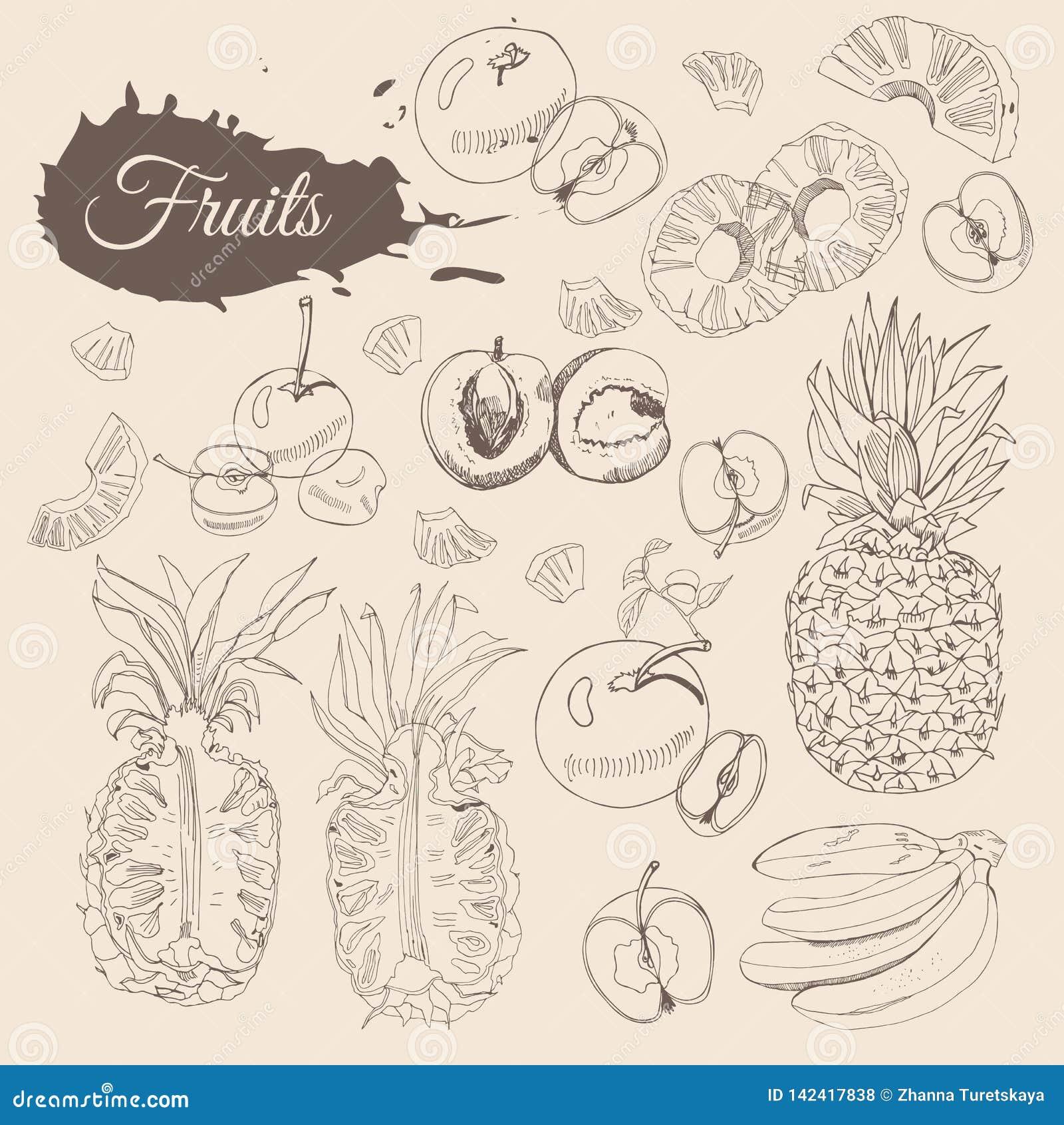 Weinlesesammlung verschiedene Früchte Ganze und geschnittene elemets auf Sepiahintergrund Hand gezeichnete Skizze