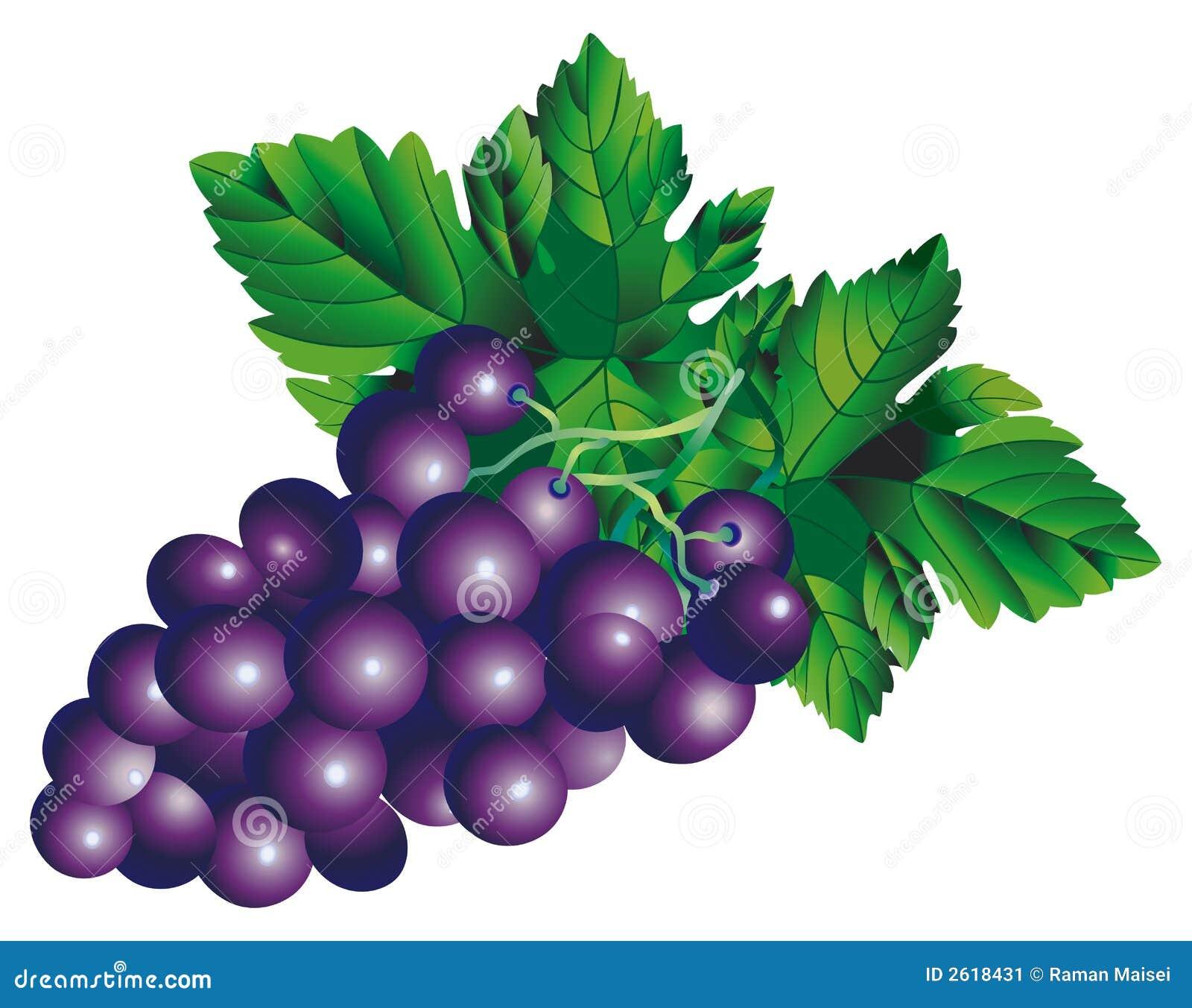 Bilder Blaue Weintrauben ~ Rasterversion des vektorbildes eines Bündels grapesThere ist