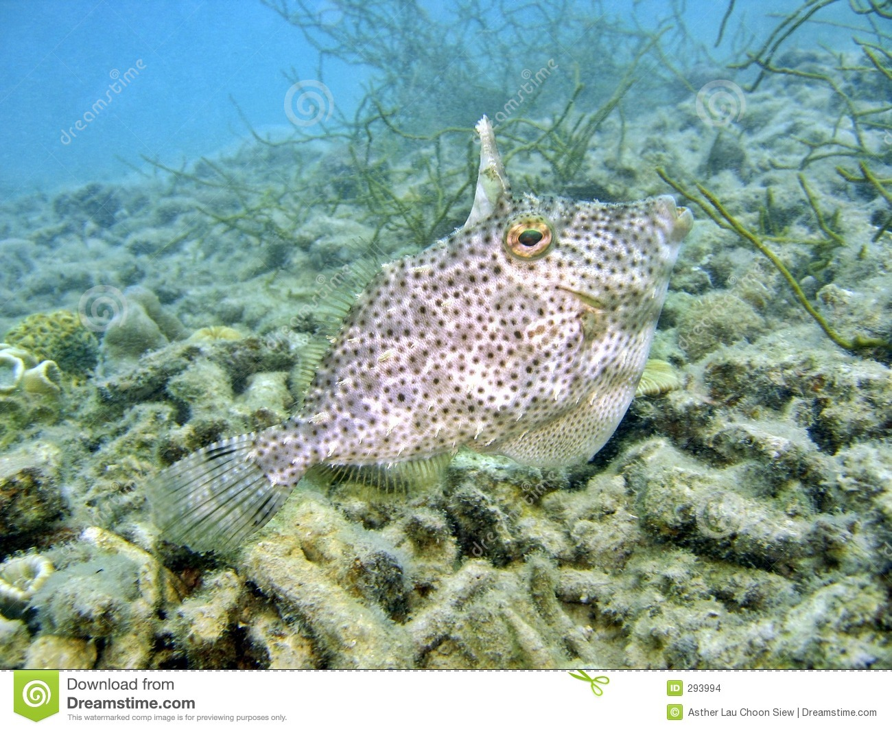 Weird Fish Stock Images - Image: 293994