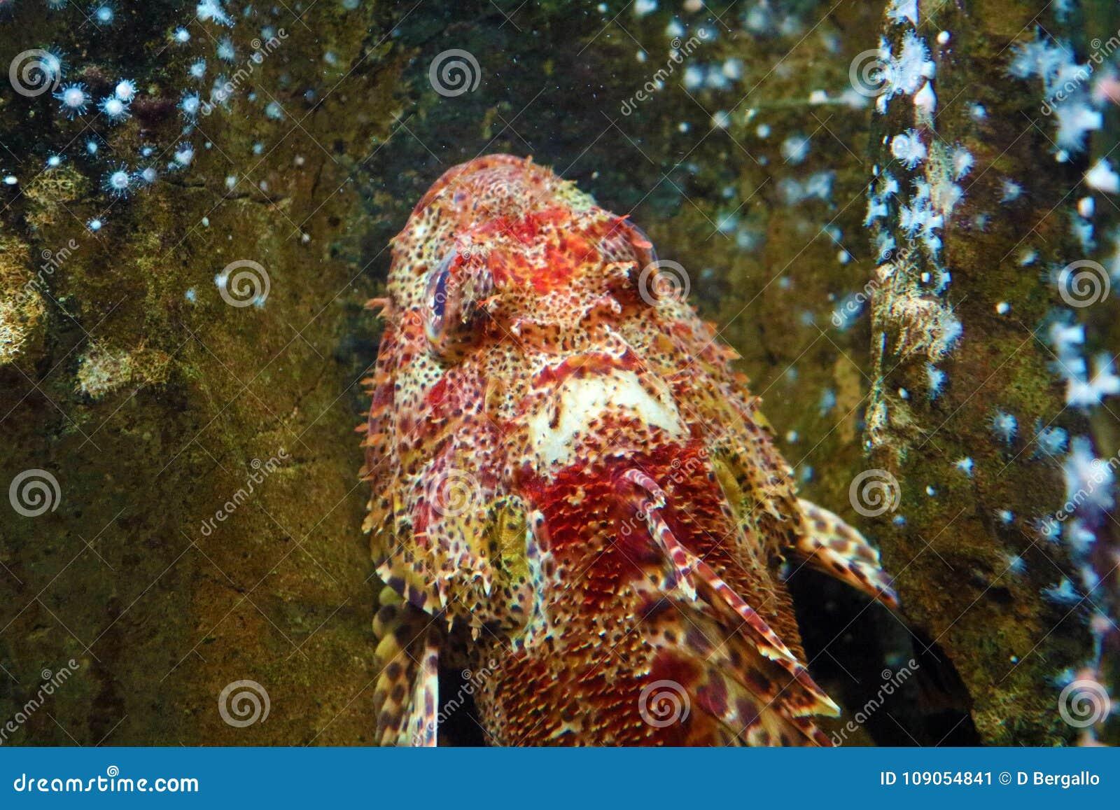 Coral Reef Weird Fish 6