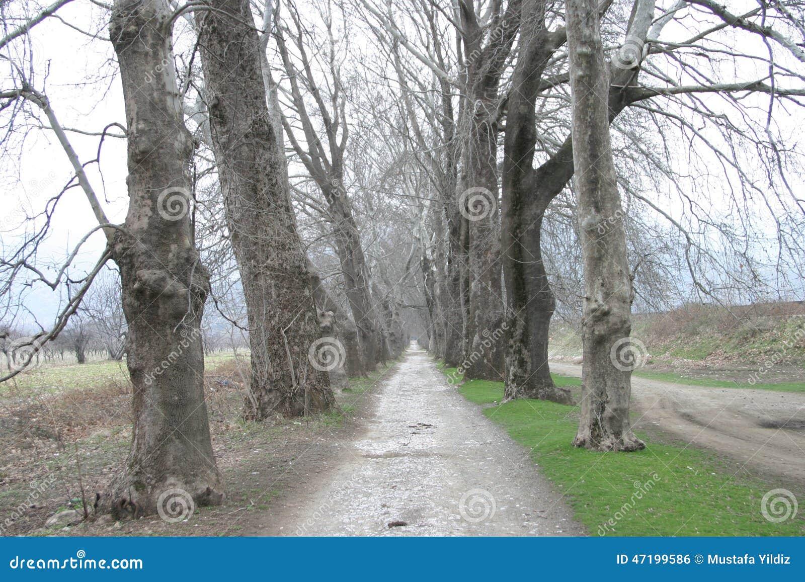 Weisen-Wald