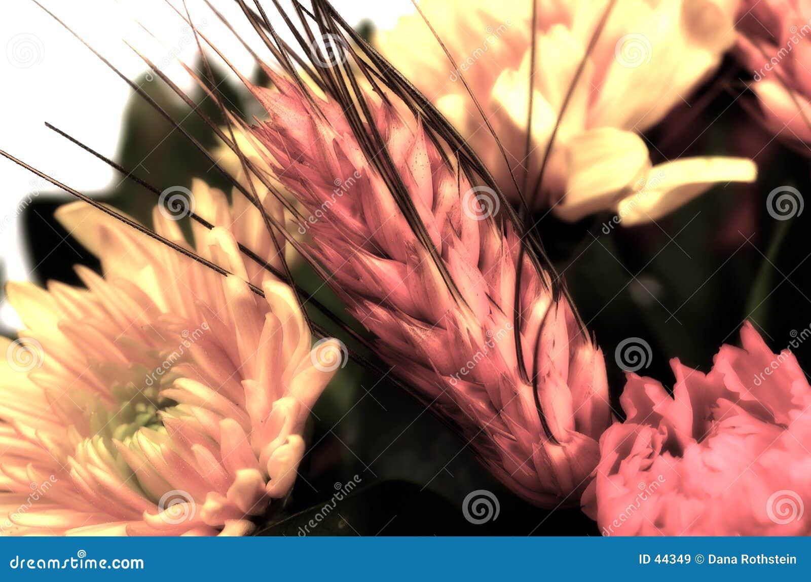 Download Weizen und Blumen stockbild. Bild von nave, floral, haupt - 44349
