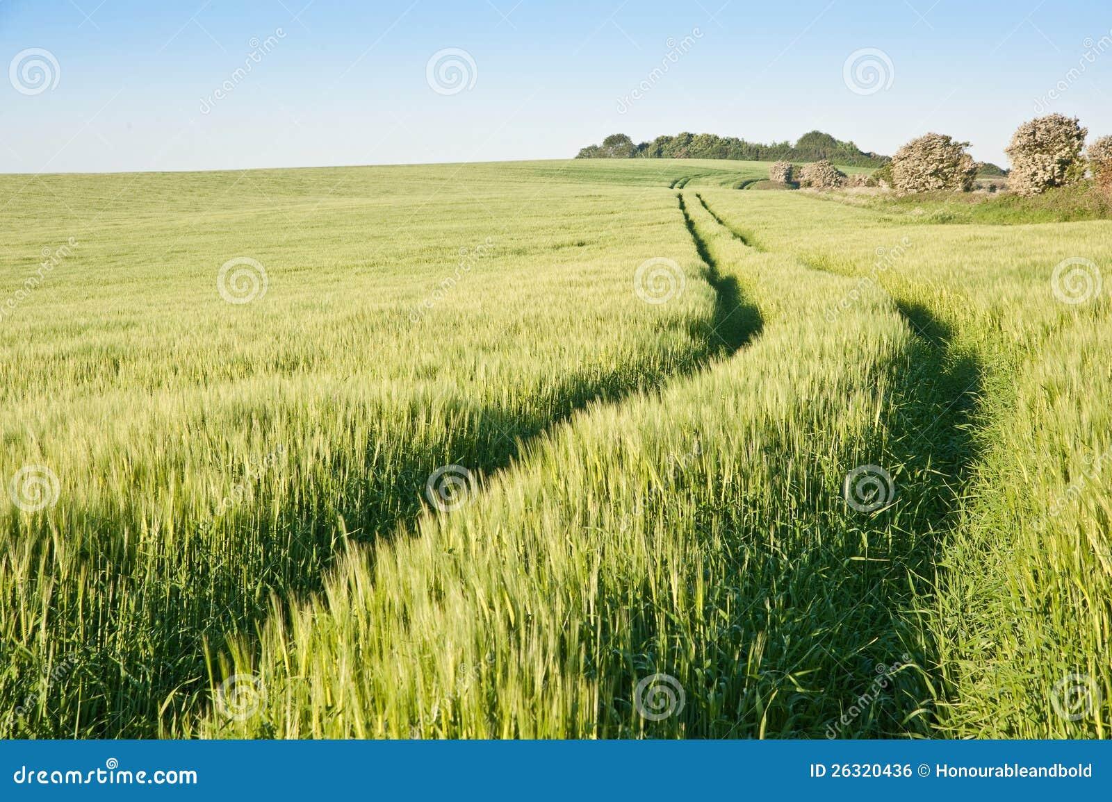 Weizenfeld am sonnenaufgang in der englischen landschaft for Dreamhome com