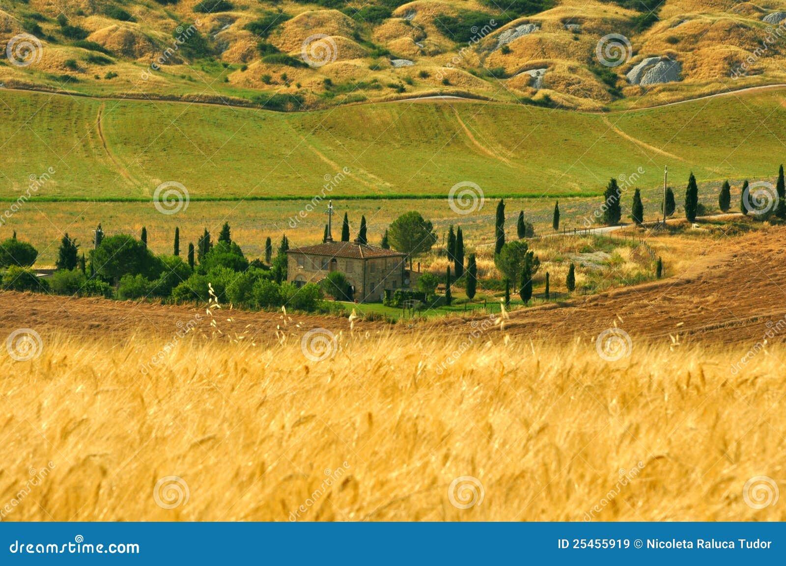 Weizenfelder in Toskana, Italien
