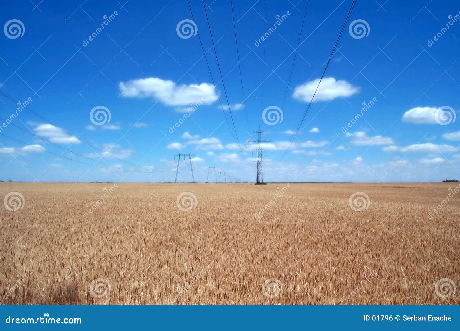 Weizenfelder und Stromleitungen