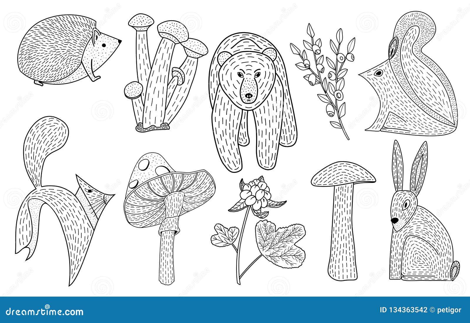 Wektorowa ilustracja śliczna ręka rysujący lasów zwierzęta, mushroo