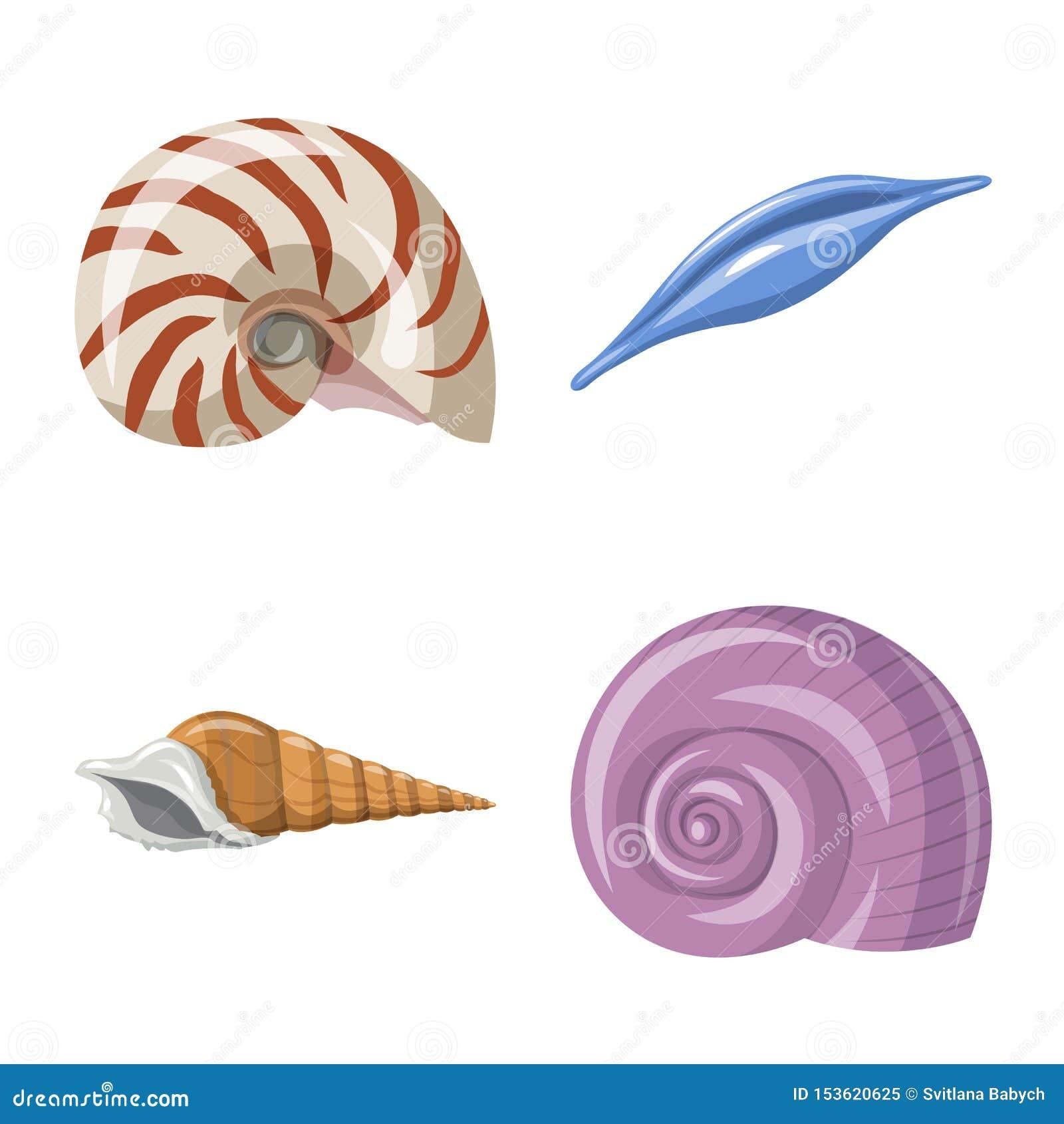 Wektorowa ilustracja seashell i mollusk znak Set seashell i owoce morza akcyjna wektorowa ilustracja
