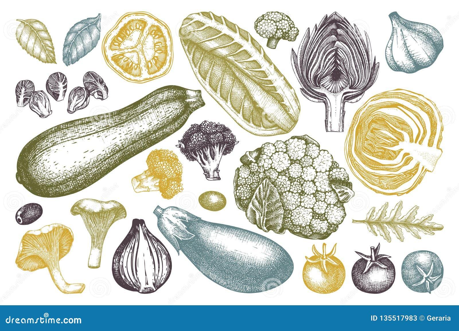 Wektorowa kolekcja ręka kreślił warzywa Rocznik pikantność i veggies ilustracje ustawiać Zdrowi karmowi rysunki dla jarosza