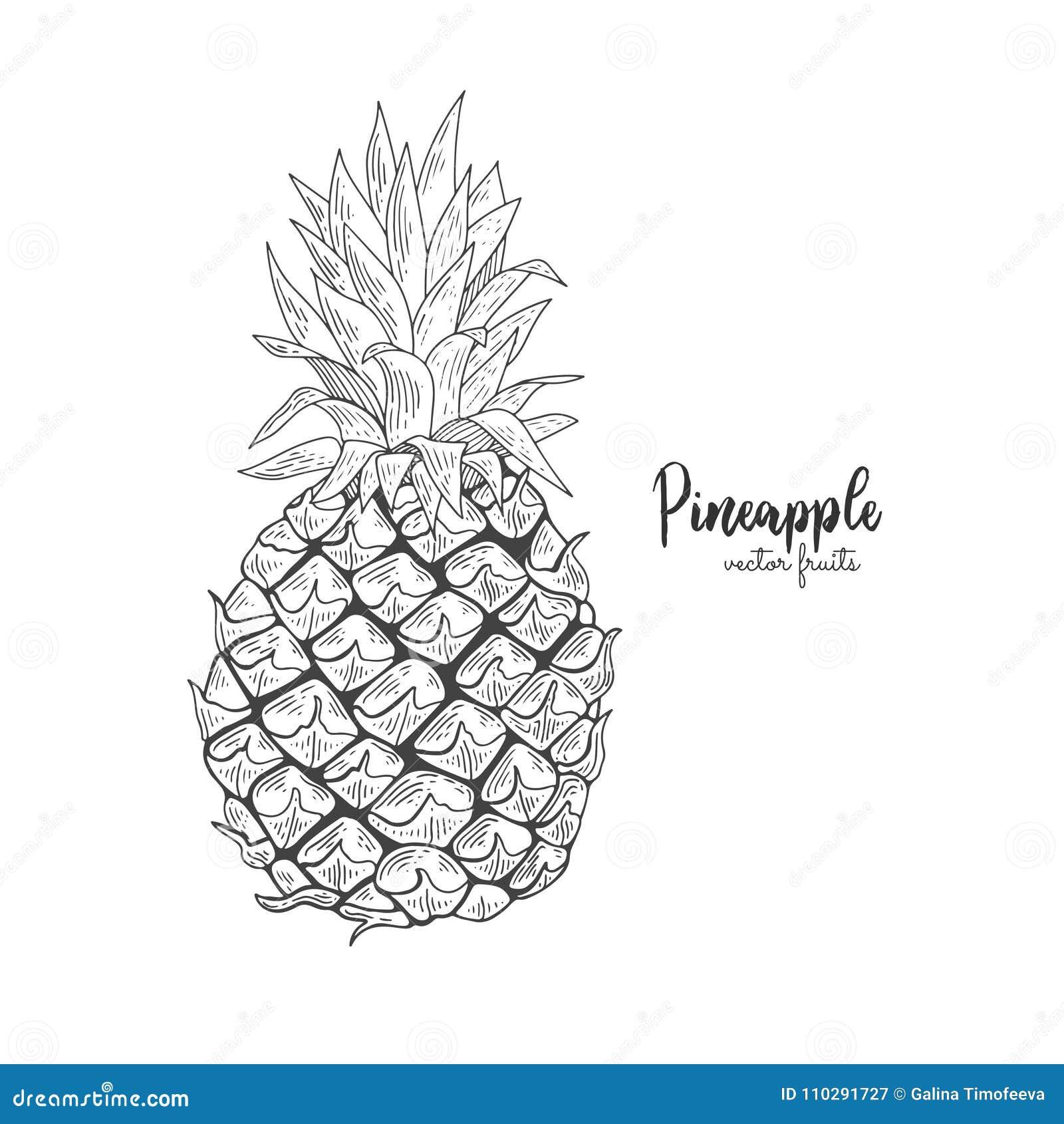 Ananas Rysunek wektorowa kreskowa ilustracja w rytownictwo stylu egzotyczny