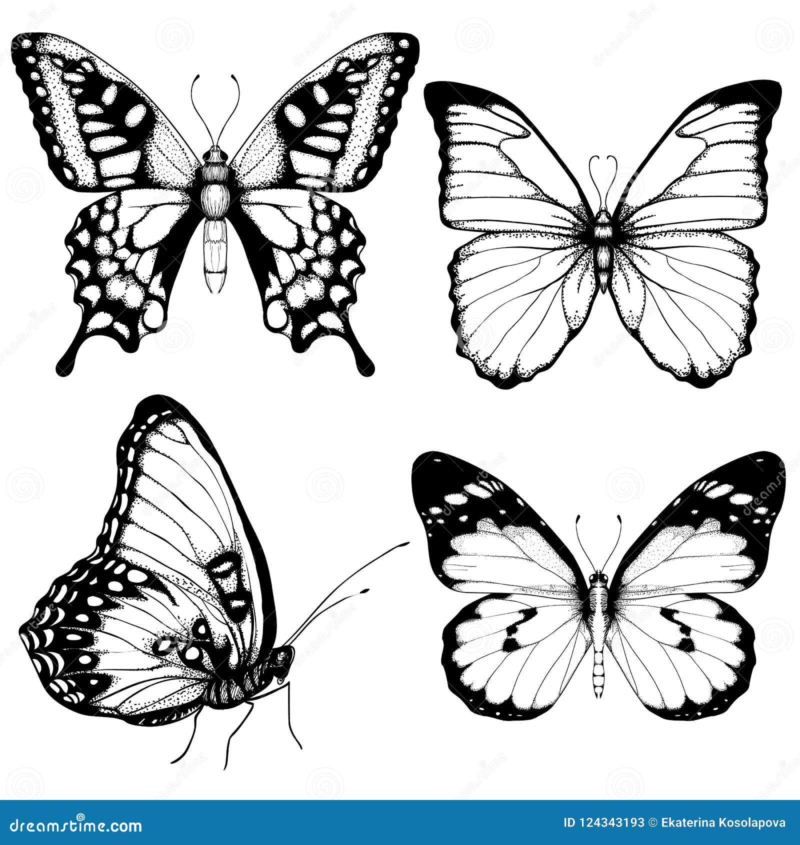 Wektorowa motylia ręka rysujący ustalony nakreślenie styl