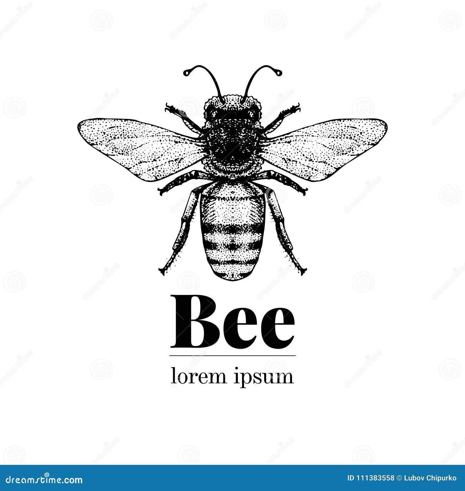 Wektorowa ręka rysująca pszczoły ilustracja Rocznika loga stylowy szablon Inteligentna insekt ilustracja