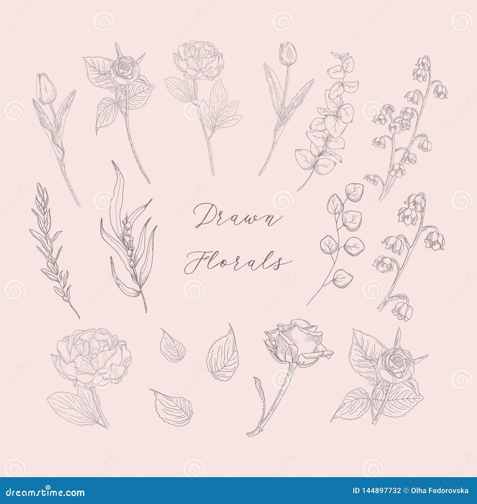 Wektorowa ręka Rysujący Kwiecisty, kwiaty, rośliny, ziele