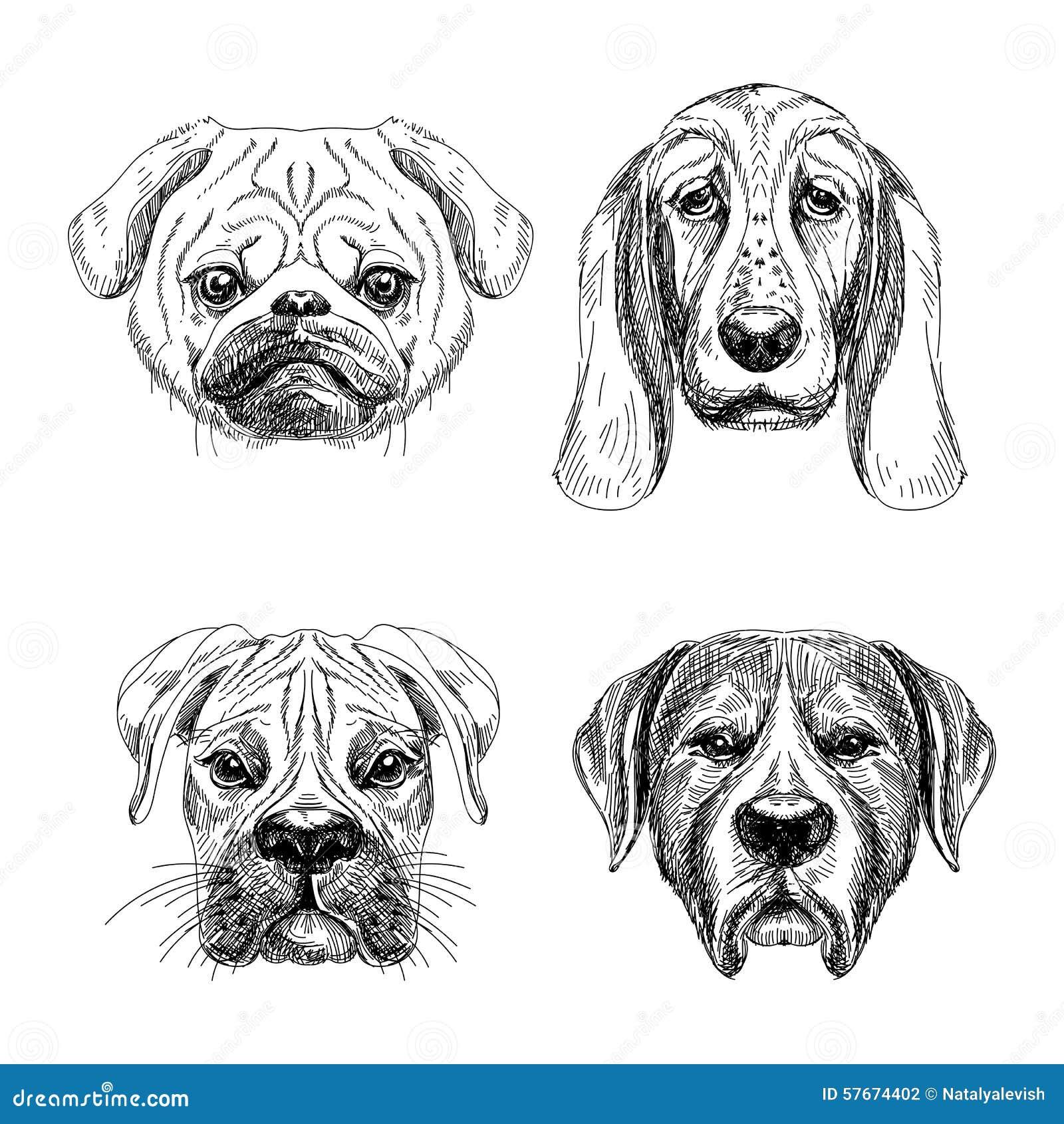 Wektorowa ręka rysujący set cztery pies twarzy