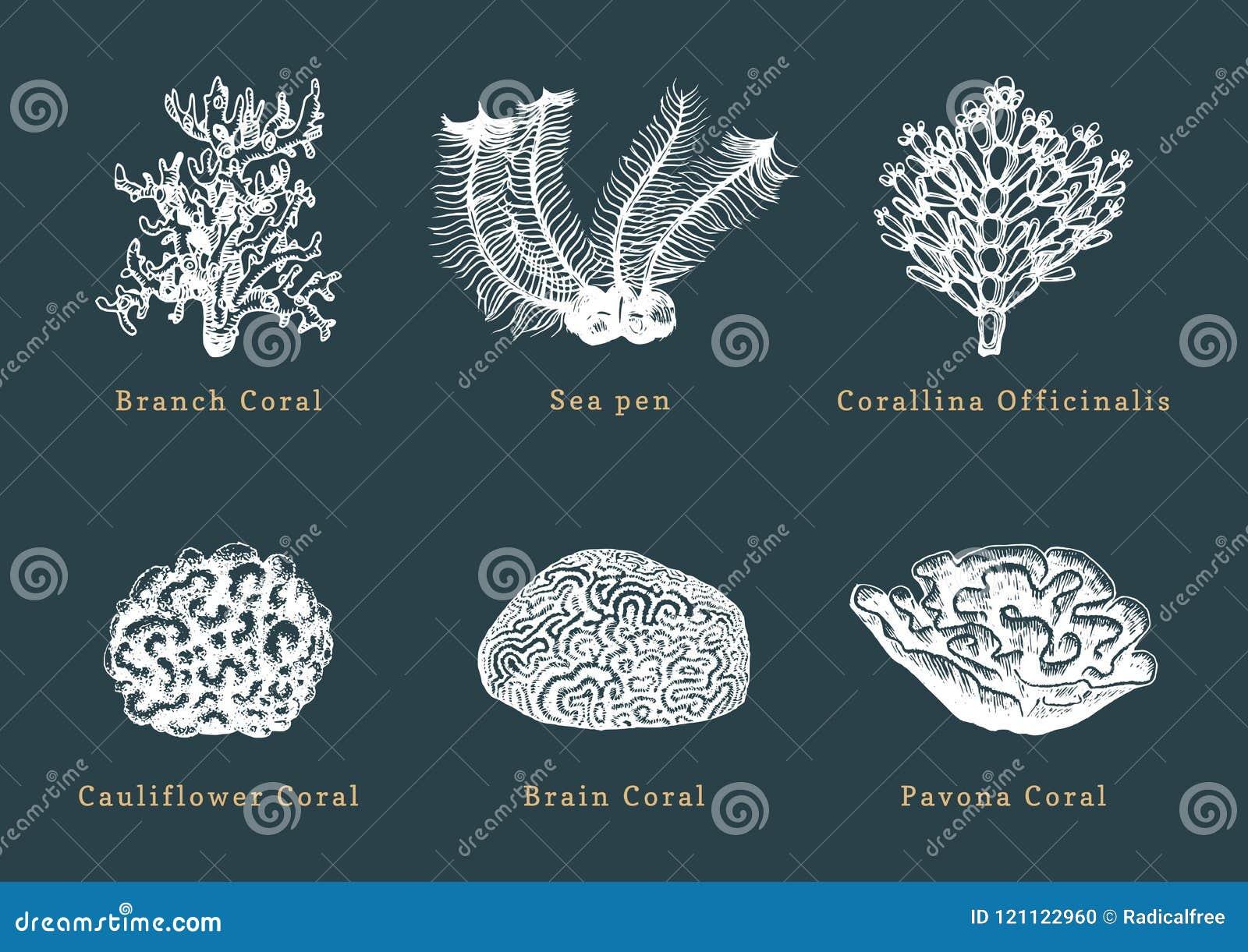 Wektorowe ilustracje korale Kolekcja patroszeni denni polipy na ciemnym tle