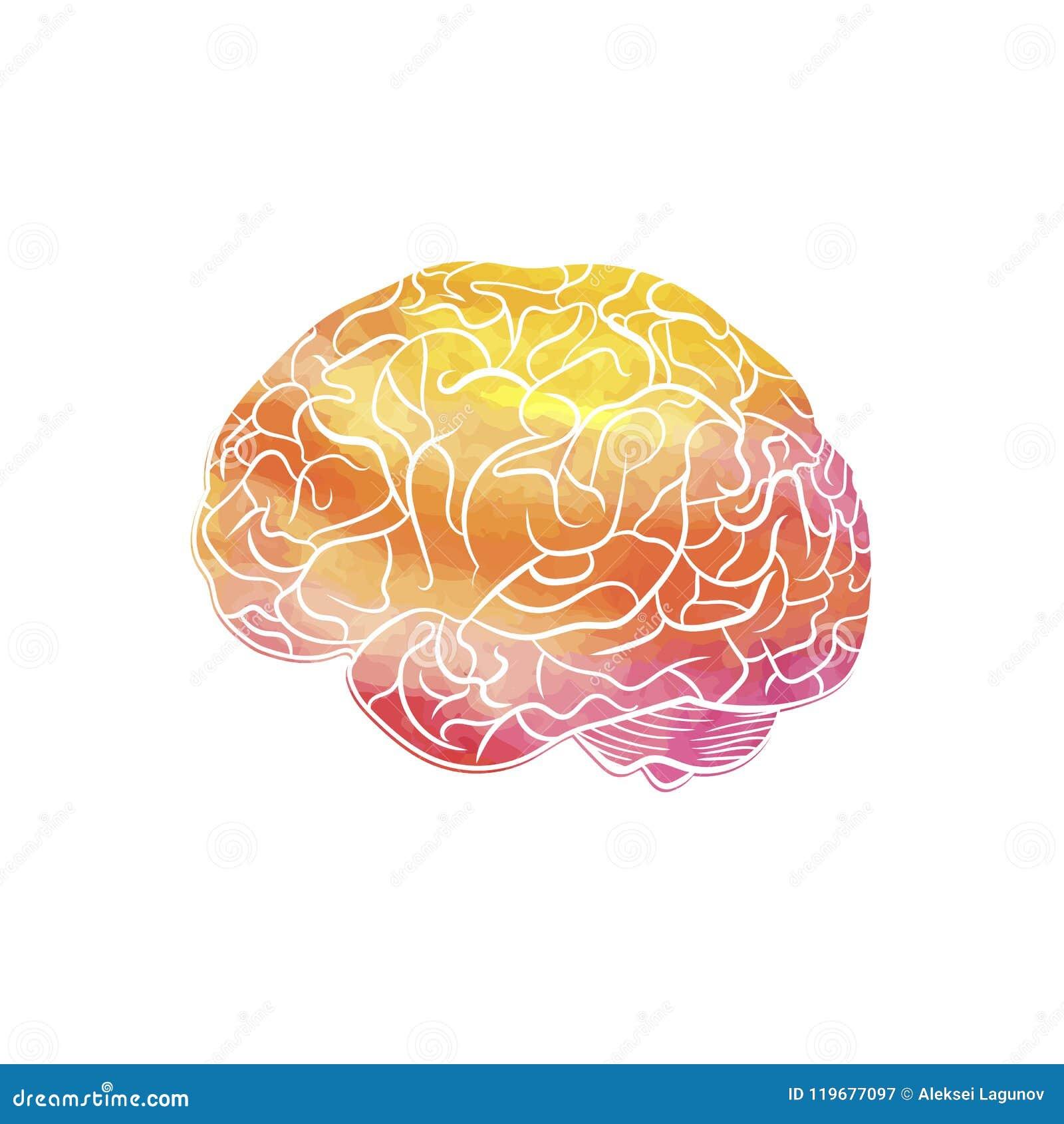 Wektorowy akwareli tekstury mózg Odizolowywający na Białym tle, Kreatywnie umysł