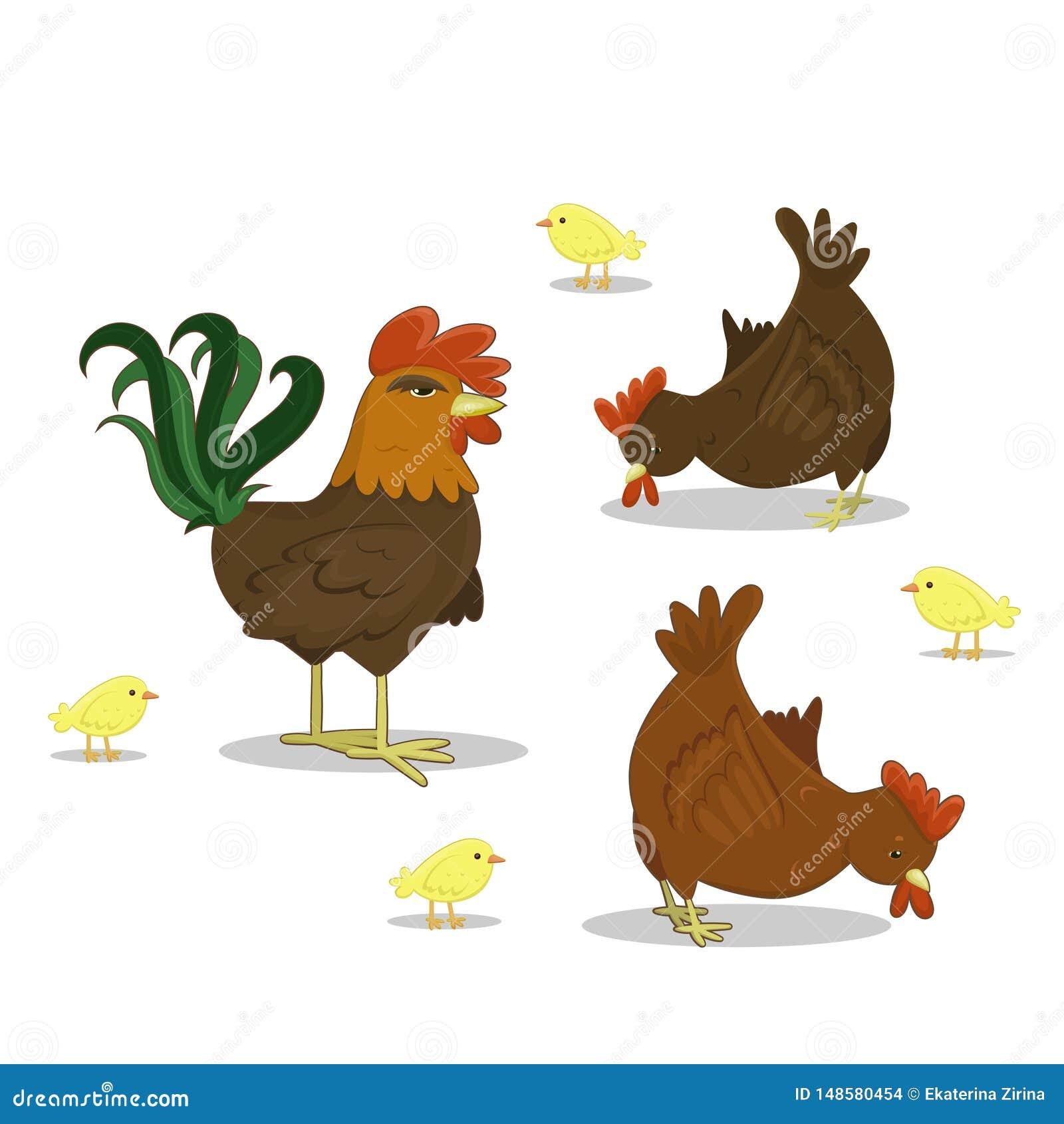 Wektorowy kogut, karmazynka, kurczaki na bia?ym tle Rolny drobiowy kurczak