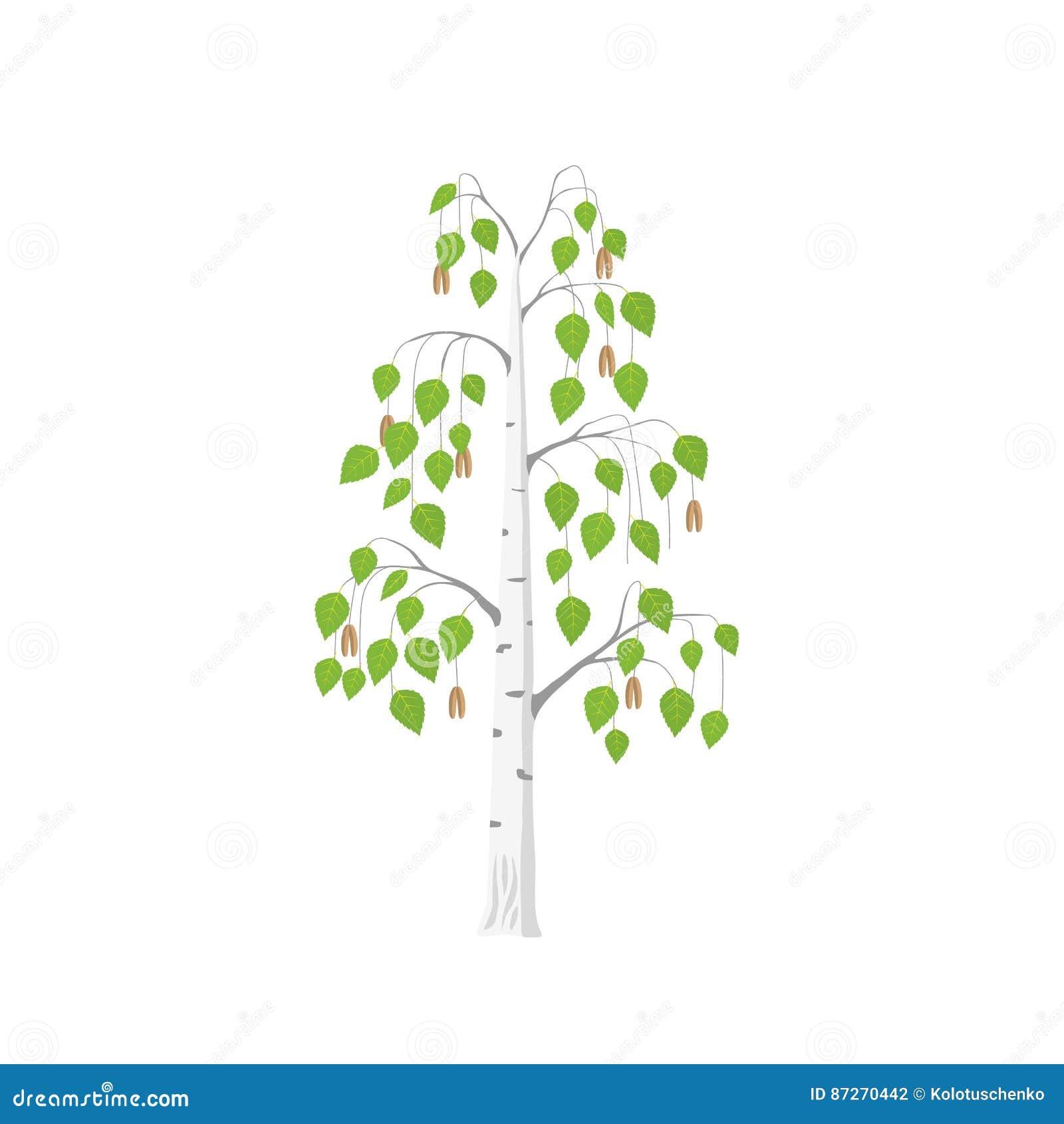 Wektorowy płaski brzozy drzewo
