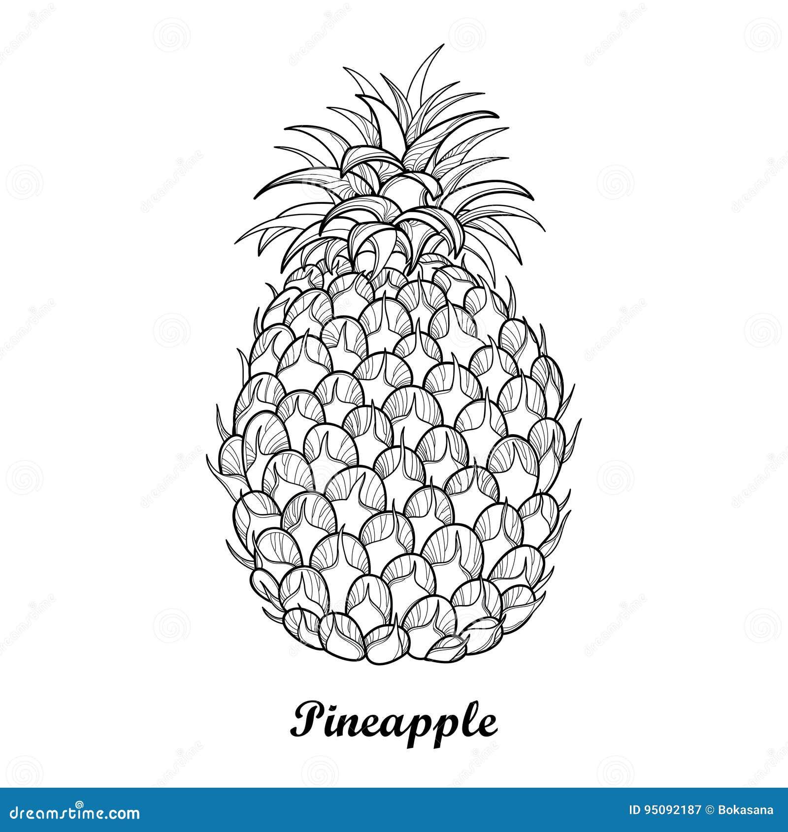 Ananas Rysunek wektorowy rysunek z konturu ananas, ananasa liść w czerni