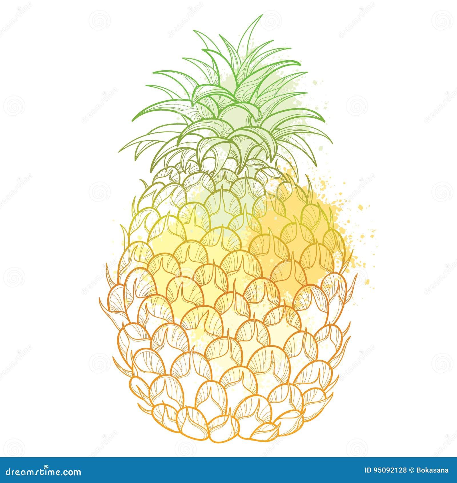 Ananas Rysunek wektorowy rysunek z konturu ananas, ananasa liść w