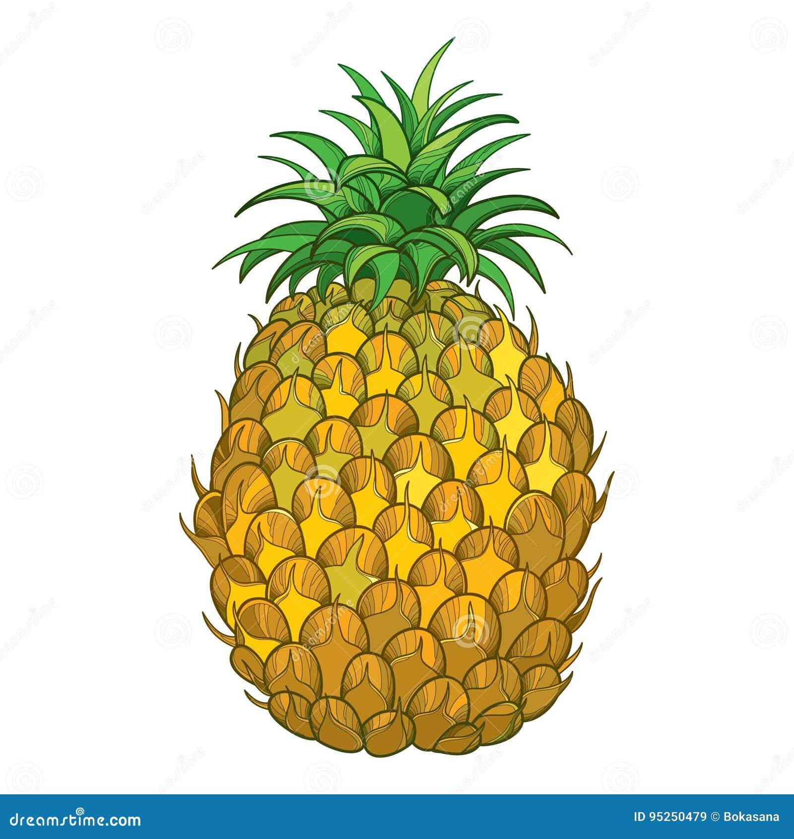 Ananas Rysunek wektorowy rysunek z konturu ananasa, ananas owoc w liściu