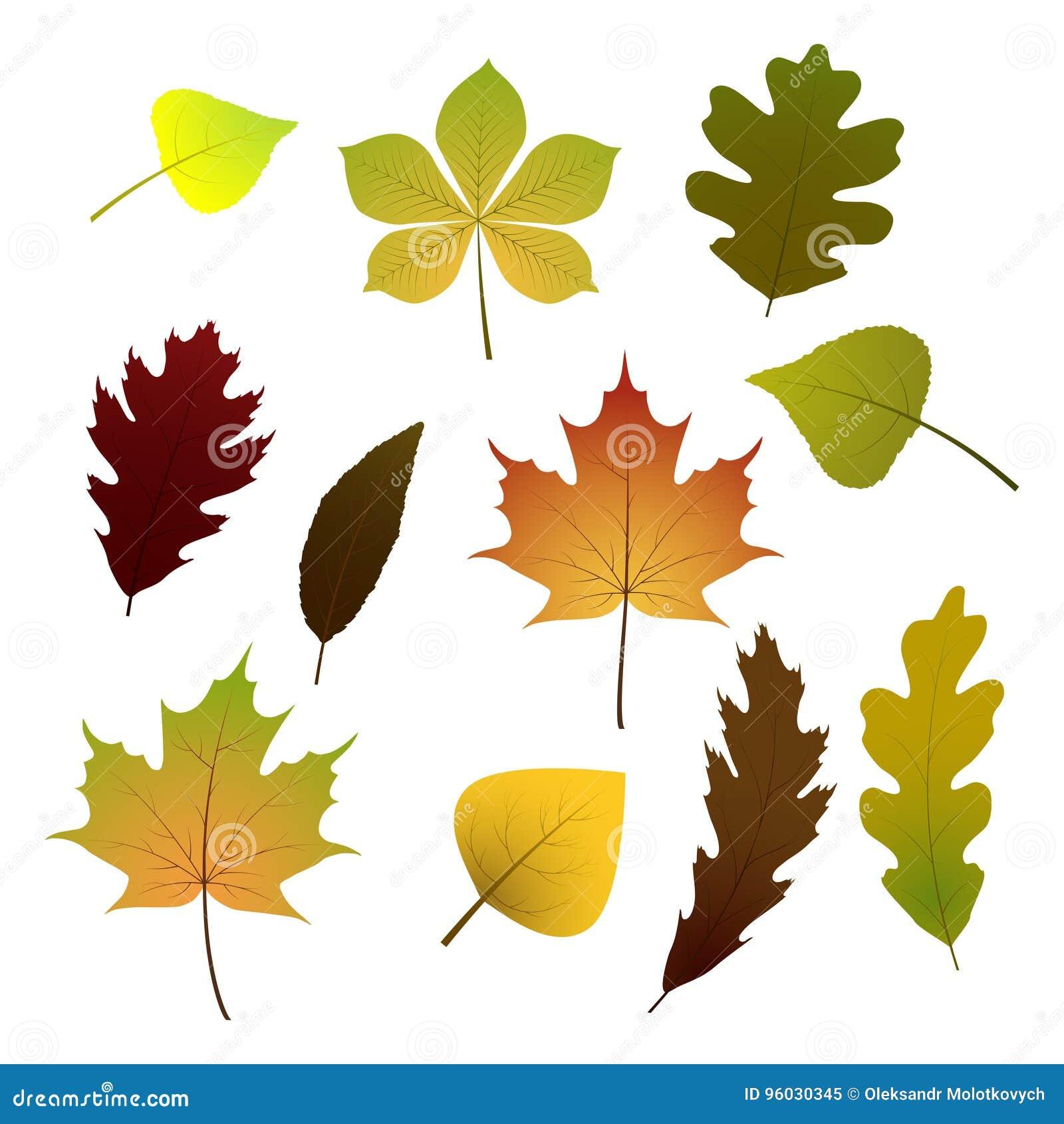 Wektorowy ustawiający kolorowi jesień liście pojedynczy białe tło