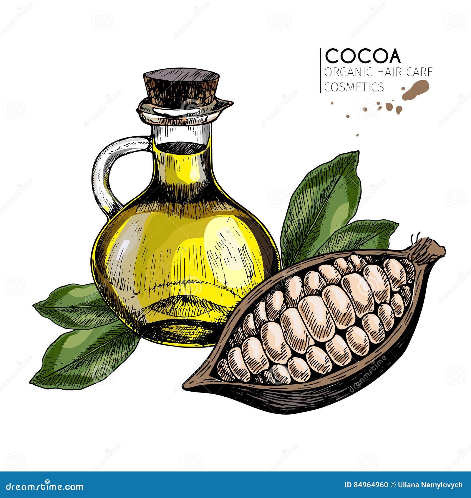 Wektorowy ustawiający włosianej opieki składniki Organicznie ręka rysujący barwioni elementy Kakaowa fasola i nafciana butelka