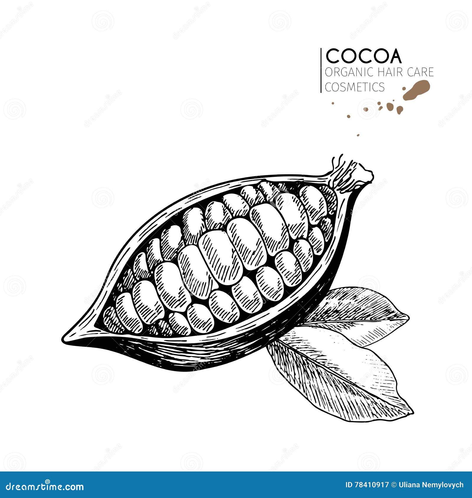 Wektorowy ustawiający włosianej opieki składniki Organicznie ręka rysujący elementy Kakaowa fasola i liście