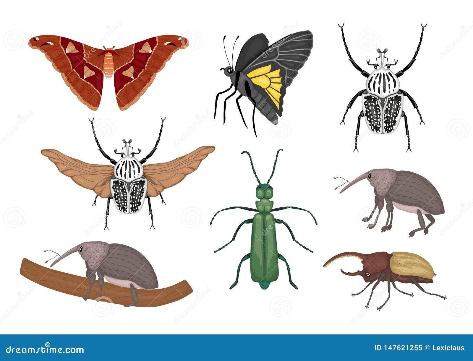Wektorowy ustawiaj?cy tropikalni insekty