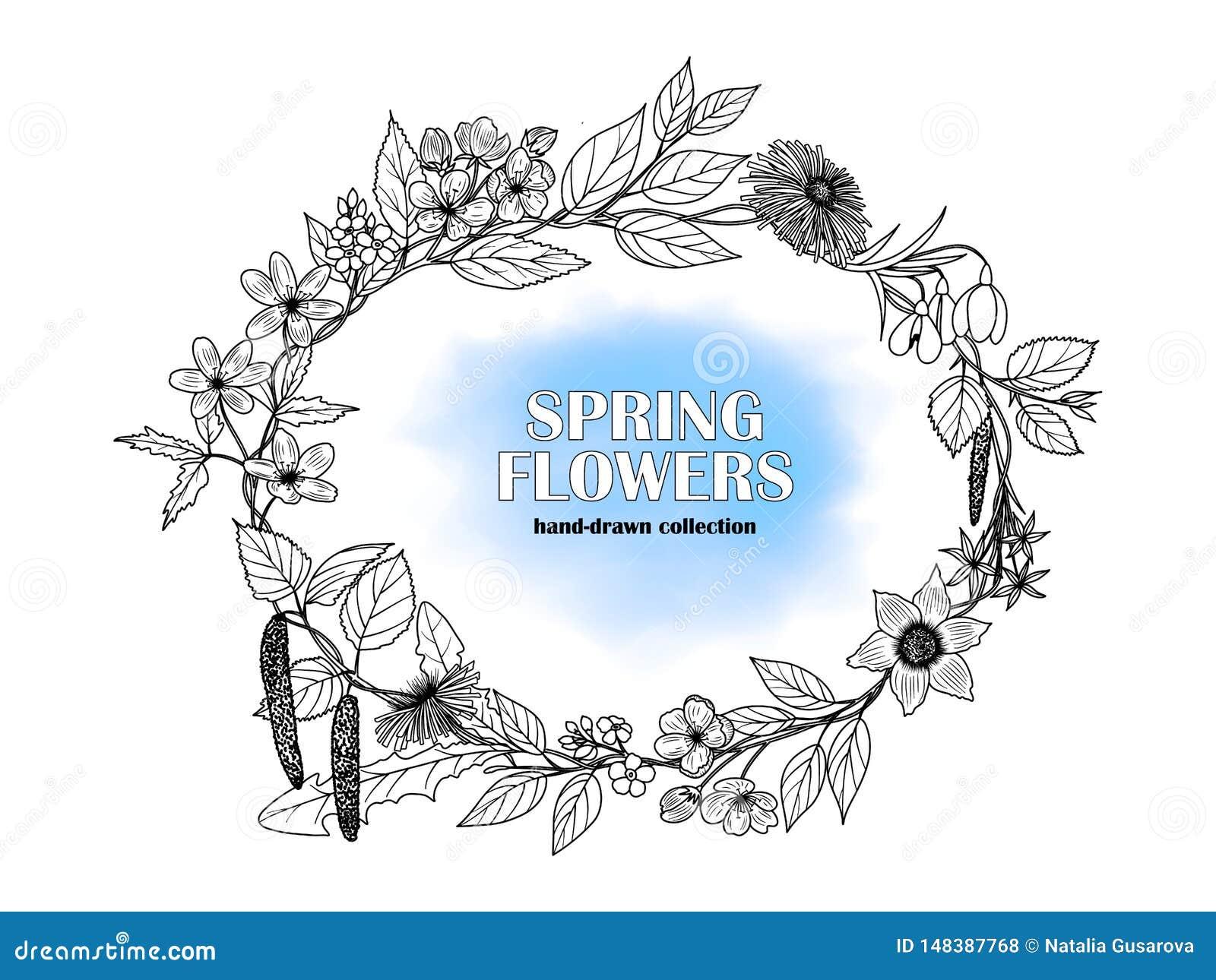 Wektorowy wizerunek rama pociągany ręcznie wiosna kwitnie