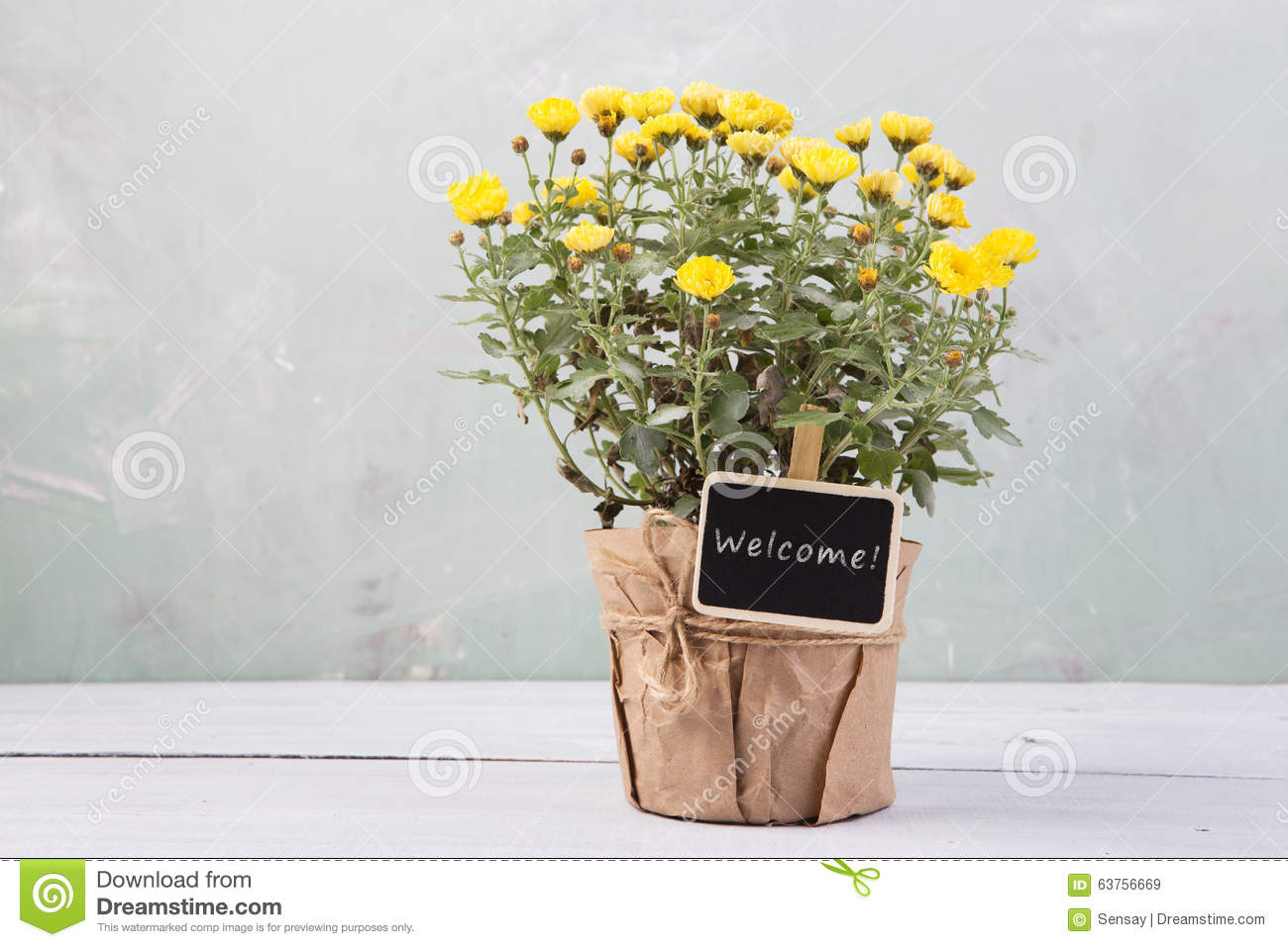 Welcome - beautiful flowers in pot with message card