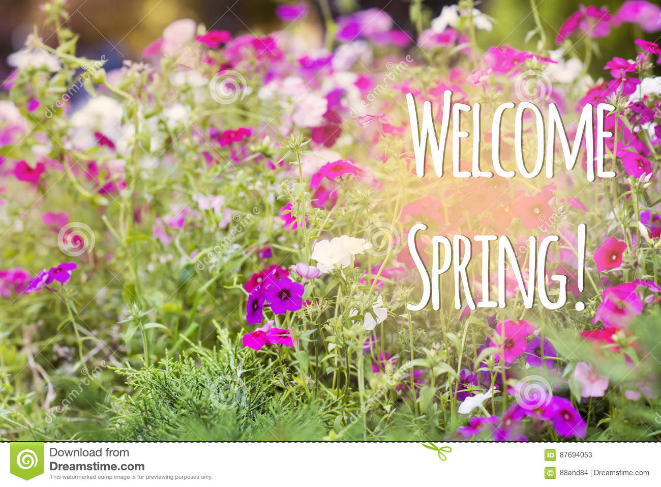 Welcome Spring Message With A Beautiful Flowers Stock Image Image