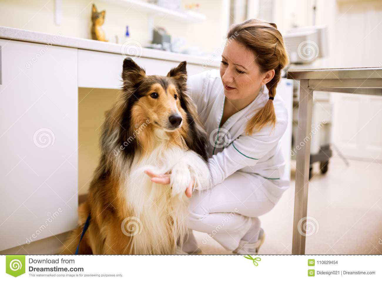 Welcome to dog patient before examining at pet clinic