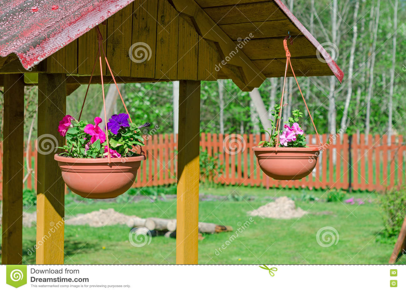 Well dekoracj petunie w garnkach