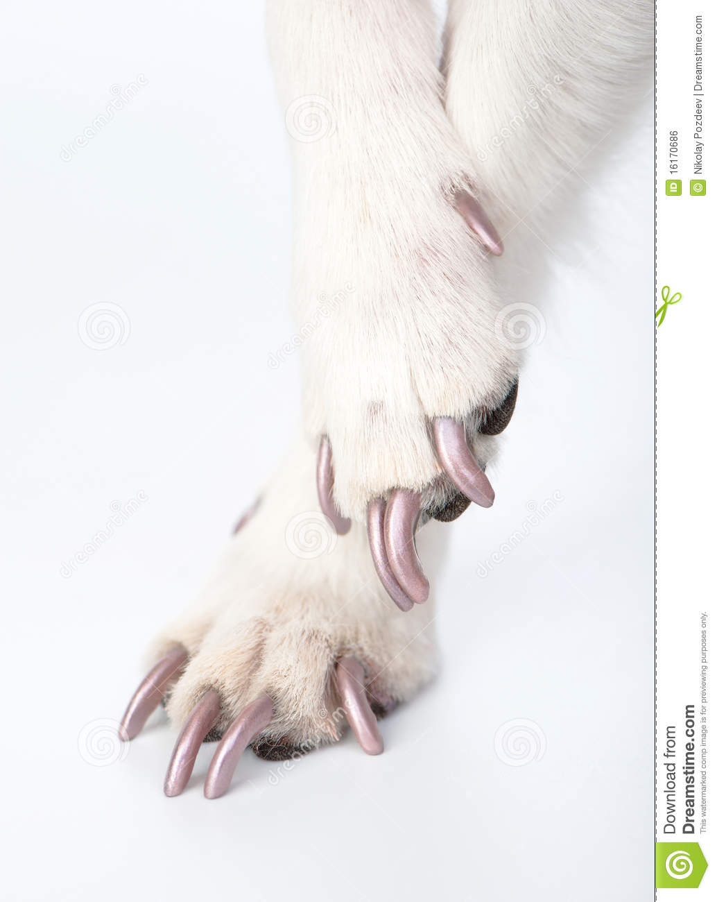 Well Groomed Dog Paws With Manicure Stock Photo Image Of Claws