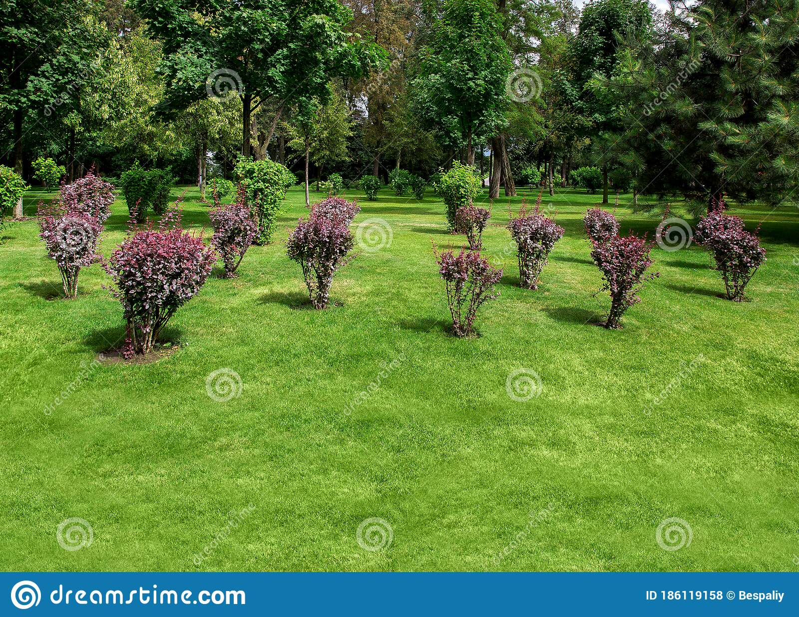 Landscape Garden Backyard With Shrub Bushes And Trees Stock Photo Image Of Lawn Green 186119158