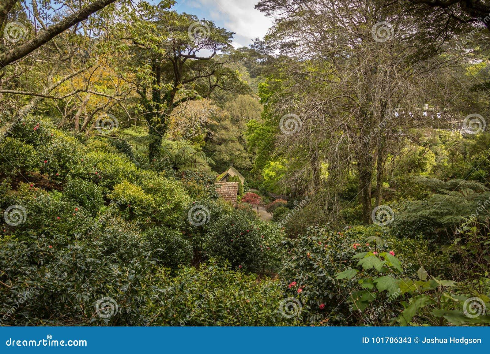 Wellington Botanic Gardens Fern Fully Stock Image - Image of fully ...