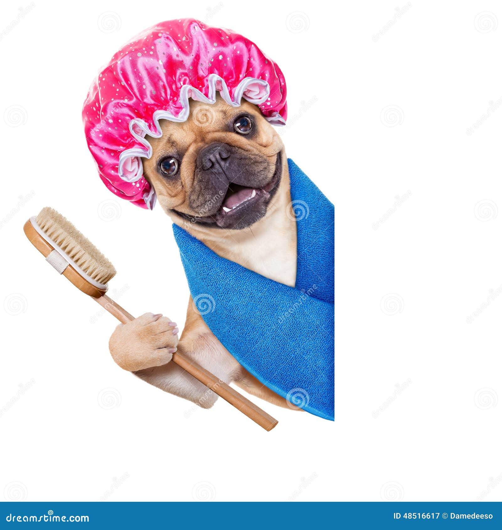Attrayant Wellness Dog