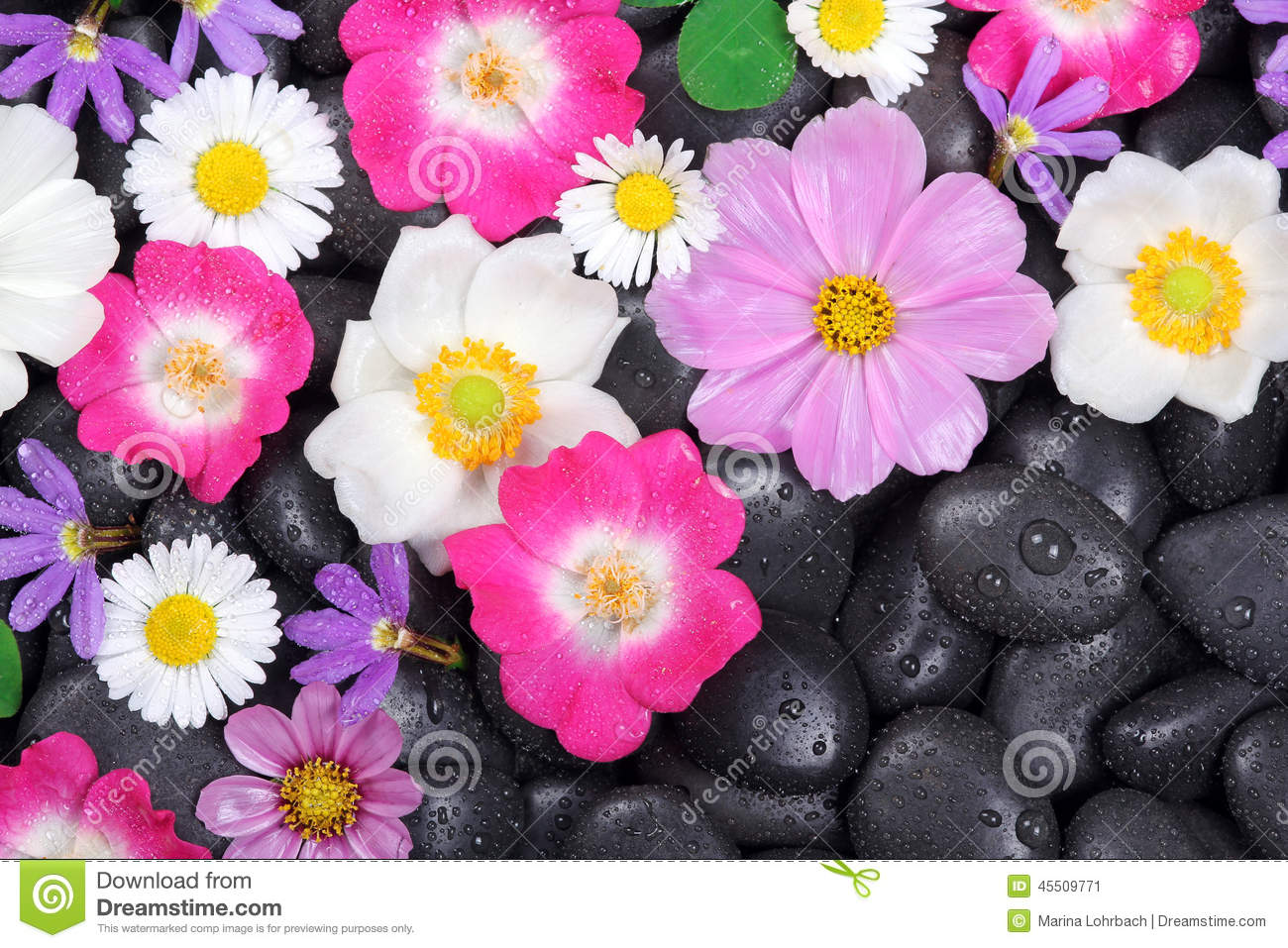 Wellness Hot Stones And Flower Background Stock Image Image Of