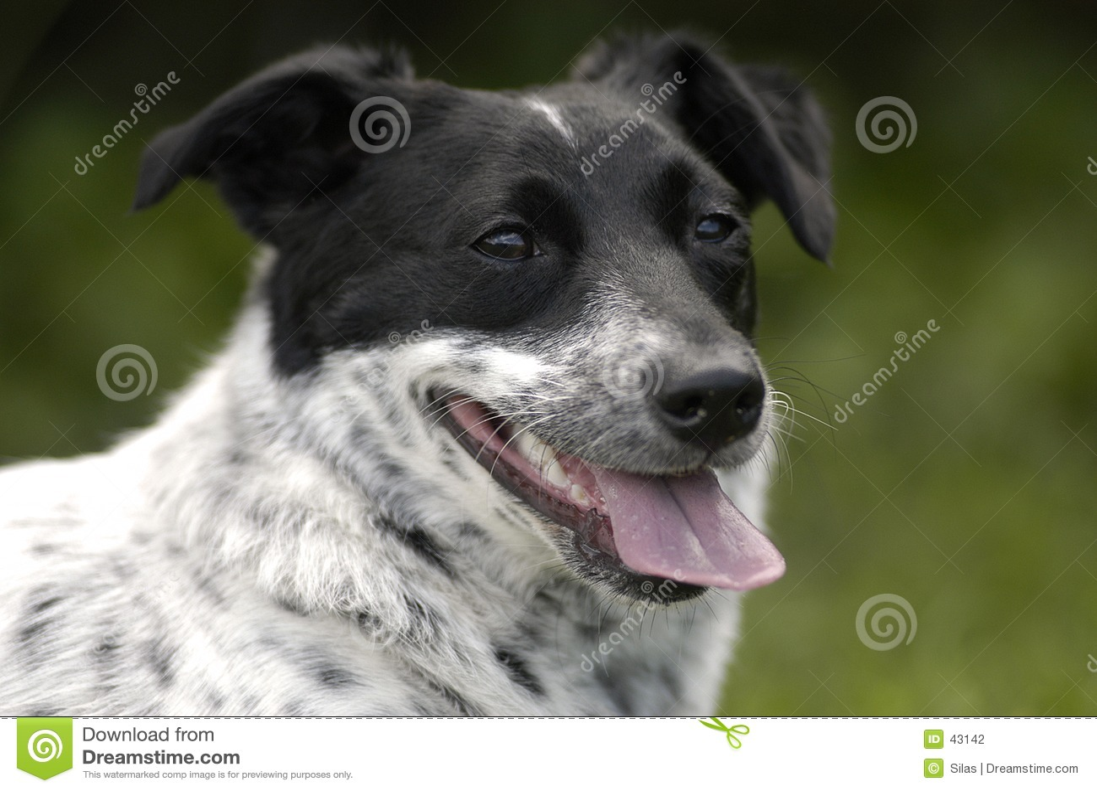 Download Welpe stockfoto. Bild von hund, augen, inländisch, keuchen - 43142