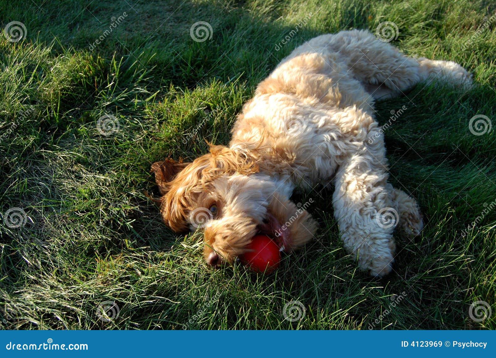 Welpe, der im Gras spielt