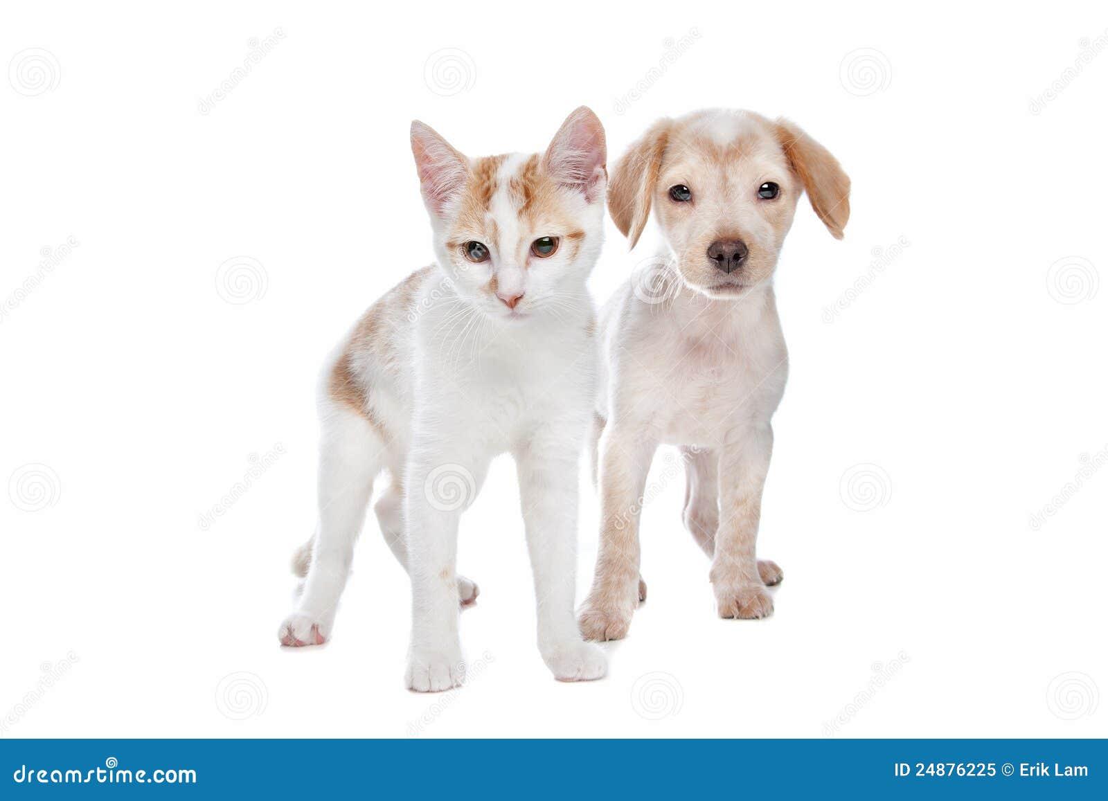Welpe und Kätzchen